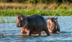 Hippo Capital - Texas