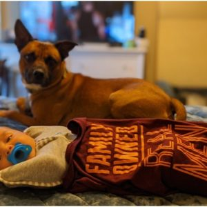How to Plan a Safe and Pet-Friendly Move During a Pandemic